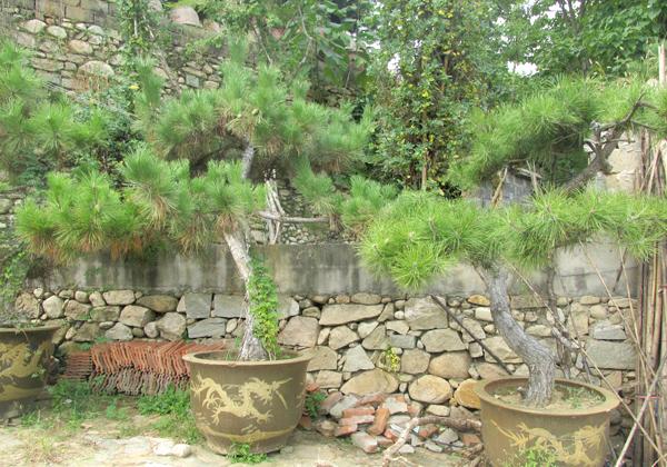 园林盆景2
